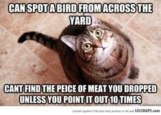 Can spot a bird from across the yard. Can't find the piece of meat you dropped unless you point it out 10 times.