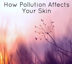 This article outlines how environmental pollution damages the skin. The best part is that it offers tips on how to combat it too! :-)  #orangicskincare #naturalremedy #honestwildbeautiful