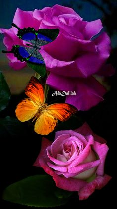 Cool Pictures For Wallpaper, Pretty Pictures, Beautiful Butterflies, Beautiful Roses, Butterfly Pictures, Butterfly Quotes, Amazing Dp, Flying Flowers, Flower Close Up