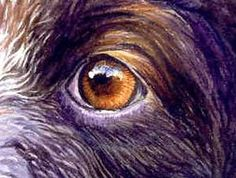 moise dog nose, eye, fur, art demonstration by Cyrille Jubert