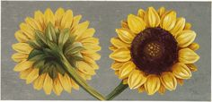 Free Vintage Sunflowers Download! - The Graphics Fairy