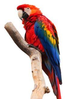 Most Beautiful Birds, Animals Beautiful, Animals Amazing, Wildlife Photography, Animal Photography, Loro Animal, Funny Bird, Animals And Pets, Cute Animals