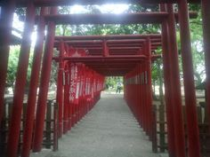 Twitter / the_s16_25e: 鳥居の道 #30jidori ...