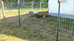 remarkable-temporary-fences-for-dogs-building-the-dogs39-fence-lilycreek-sanctuary-youtube.jpg (600×337)