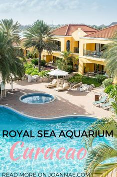 A Solo Traveler's Experience at The Royal Sea Aquarium Resort Curacao Travel Around The World, Around The Worlds, Sea Aquarium, Caribbean Culture, Family Resorts, Caribbean Vacations, Travel Reviews, Family Travel, Family Trips