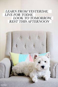 Dog Mansion House Westie