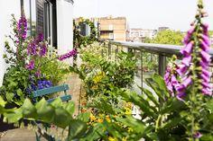 Roof garden and terrace in Baker street overlooking Regents Park Garden Landscape Design, Garden Landscaping, Trachelospermum Jasminoides, Climbing Hydrangea, Fountain Grass, Roof Terraces, Garden Images, Western Red Cedar, Baker Street