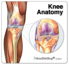 132 best anatomy knees images in 2018 human anatomy leg anatomy Parts of the Knee Meniscus you should always take a break once in a while from working out and switch up the parts your body that you work out so that you don t overuse a part of