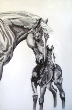 Mare and foal- Charcoal Portrait