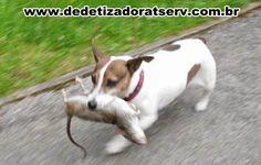 Blog do rato - Associação Brasileira de Franchising: RATOS EM LONDRES
