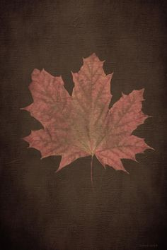 Large Maple Leaf on Three Foot Tree