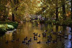 L'automne au Domaine Maizerets | Flickr: partage de photos!