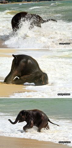 10+ Baby Elephants That Will Instantly Make You Smile