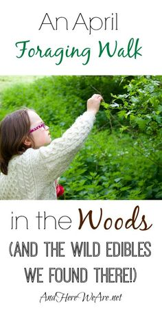 An April Foraging Walk in the Woods and the Wild Edibles we Found There