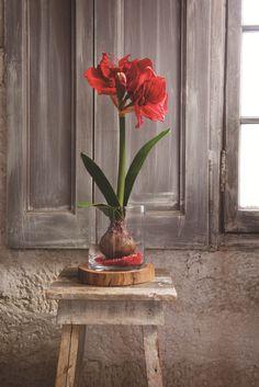 Domov tvoří detaily Indian Eyes, Spring Flowers, Flower Arrangements, Glass Vase, Merry Christmas, Indoor, House Design, House Styles, Plants