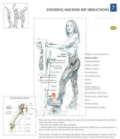 Standing machine hip abductions ~ Re-Pinned by Crossed Irons Fitness #hip #fitness #workout