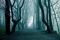 in a lone and misty wood