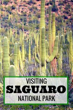 Guide and tips to exploring Saguaro National Park with kids | Arizona with kids | Tucson with kids