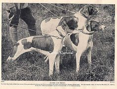 POINTER HUNTING DOG 3 dogs in the Field  1934 DOG ART PRINT • CAD 14.85