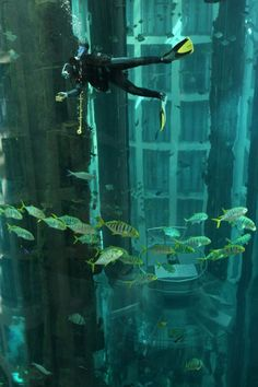 Unbelievable! Elevator inside Aquarium    This AquaDom was built in one of Berlin's hotels in 2003. It's the biggest cylindrical acrylic glass aquarium in the world filled with 900,000 liters of seawater and 2,600 fish of 56 species. Two divers work full-time to clean this huge 25 meter tall aquarium! No wonder that AquaDom, which cost over 12 million euros, is the main attraction in Berlin.