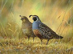california quail - Painting Art by Eleazar Saenz