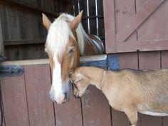 barnyard love