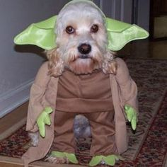 "Some inspiration for ""National Dress Up Your Pet Day"""