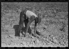 [Untitled photo, possibly related to: Harvesting potatoes, Jefferson County, Kentucky] | Library of Congress