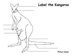 Kangaroo activity