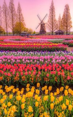 Flower gardening one of the best occupation. It is also the natural beauty which… awesome Flower gardening one of the best occupation. It is also the natural beauty which… Amazing Gardens, Beautiful Gardens, Tulip Fields, Beautiful Flowers Garden, Beautiful Places To Travel, Spring Garden, Land Scape, Beautiful Landscapes, Wild Flowers