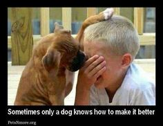 ♥sometimes only a dog knows how to make it better... (Photo only)..
