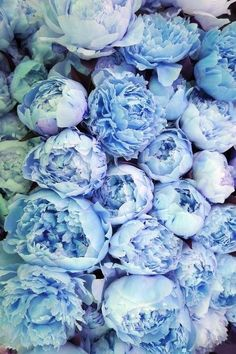 #clear #blue #flower