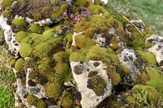 Flora of Dry Stone Walls