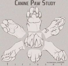 Canine Paw Study/Angles/Tutorial by TIFFASHY on DeviantArt OH WOW SUCH FEEDBACK! Thank you all! -Program that i use is always PhotoShop I did some Photo manipulation on my-self in the beginning. i hope you did learn a bit of enjoy my dea… Animal Sketches, Animal Drawings, Drawing Sketches, Drawing Animals, Art Drawings, Design Reference, Drawing Reference, Dog Anatomy, Animal Anatomy