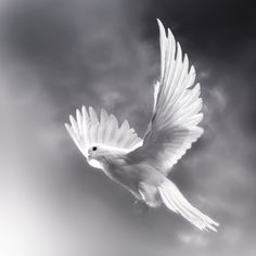 Pure Soul by Josep Sumalla on 500px