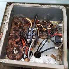 Home Inspection Nightmares Xxv Mice Stupid Stuff And Humor