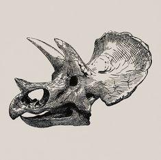 Dinosaur Skeleton Ink Pen Illustration Triceratops Throw Pillow by EnShape - Cover x with pillow insert - Indoor Pillo Skeleton Drawings, Skeleton Tattoos, Skeleton Art, Skull Tattoos, Human Skeleton, Dinosaur Illustration, Pen Illustration, Animal Skeletons, Animal Skulls