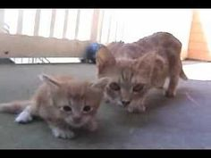 This is an adorable video. Mama cat comes to rescue her little scared kitten.