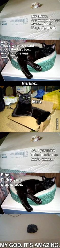 Just cats and their boxes...