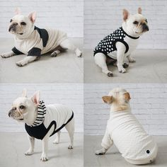 French Bulldog, wearing Modern Dog Clothing and Accessories from Pipolli.