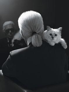 Cha'rl Cha'gerfeld... heu, Karl Lagerfeld... qu'on l'aime ou qu'on le déteste, il partage une chose avec le chat : il ne laisse personne indifférent... le personnage a d'ailleurs quelque chose de félin...