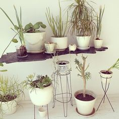 Create dimension and height with a floating shelf — the look is so simple and streamlined, all you'll notice is the plants. Source: Instagram user jeanasohn