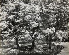 Otto Steinert -  Die Bäume vor meinem Fenster 2 (The trees in front of my window 2), 1956