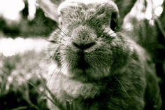 Clover bunny :)  https://www.etsy.com/listing/174513102/rabbit-print-bunny-print-black-and-white?