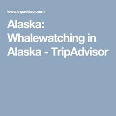 Alaska: Whalewatching in Alaska - TripAdvisor