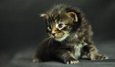 Bilder Hintergrundbilder herunterladen kostenlos Bild 1024 x 600 Kätzchen