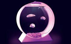 Avec cet aquarium à méduses, observez la grâce et l'élégance de cet animal marin en direct de votre salon.Ce kit complet comprends le matériel nécessaire pour garder vos méduses en vie,...