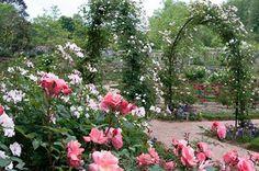 #Roses at #Biltmore Estate.