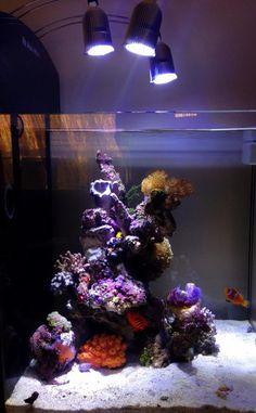 1366 Best Aquariums Saltwater Fish Tanks And Various Sea Life
