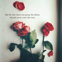 """""""But he who dares not grasp the thorn, should never crave the rose."""" - Anne Brontë"""